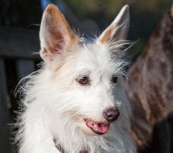 Hund Paloma – Teammitglied von Hundetrainer Christian Niemand