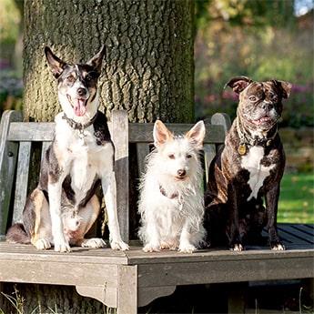 Das Hundetrio der Hundeschule sitzt auf einer Bank