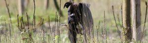 Ein junger Hund erkundet die Umgebung in der Hundeschule