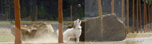 Ein Hund beim Ballspiel in der Hundeschule Franklin & DOGS aus Dortmund