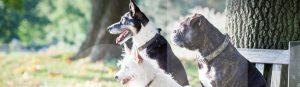 Drei Hunde sitzen beim Training in der Hundeschule auf einer Parkbank