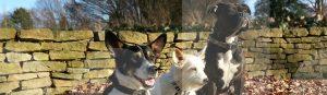 Drei Hunde im Hundetraining bei Franklin & DOGS während einer Bleib-Übung