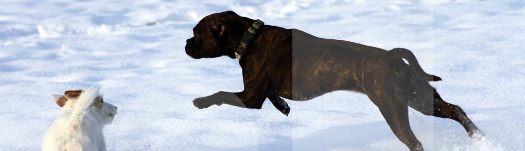 Titelbild zuTitelbild - News der Hundeschule Franklin & Dogs aus Dortmund den News der Hundeschule Franklin & Dogs aus Dortmund