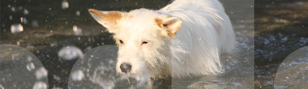 Ein Hund holt beim Apportieren in der Hundeschule seinen Dummy aus dem Wasser