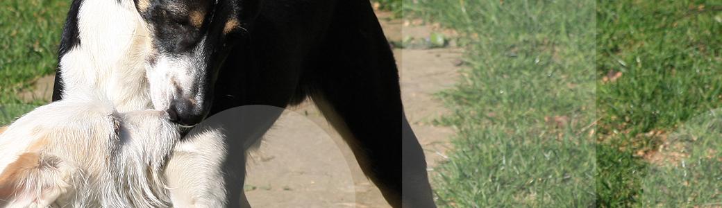 Titelbild - Problemhundetherapie in der Hundeschule Franklin & DOGS aus Dortmund