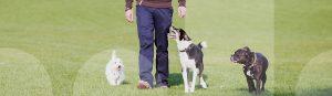 Drei Hunde lernen in der Hundeschule körperorientiertes Laufen mit sprachfreien Trainingsmethoden