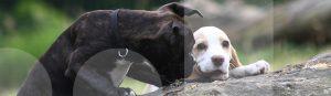Zwei Welpen erkunden im Welpenkurs gemeinsam die Umgebung der Hundeschule