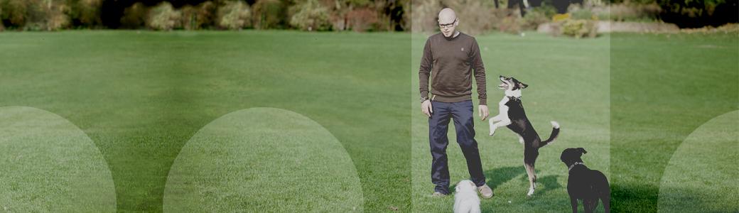 Titelbild - Hundetrainer Christian Niemand aus Dortmund mit Team