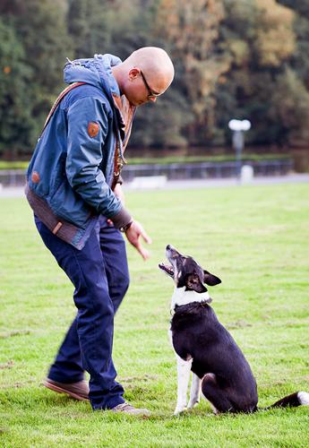 Nonverbale Arbeit mit einem Hund, in der Hundeschule Franklin & DOGS