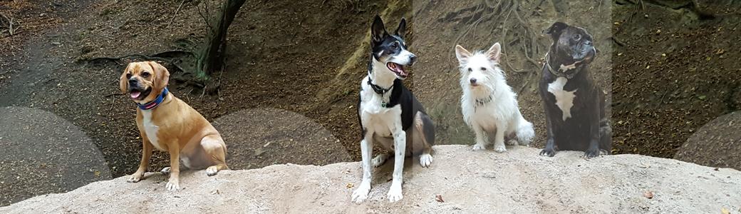Vier Hunde konzentrieren sich bei einer Übung im Hundetraining auf verschiedene Orientierungspunkte